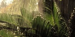 chuva-nas-arvores