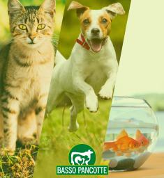 Catálogo Pet Ícone Site