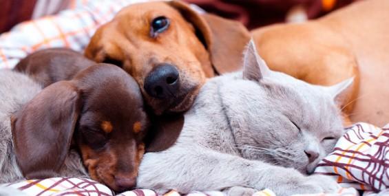 Otites em cães e gatos