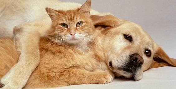 Verminose em Cães e Gatos