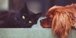 Intoxicações em cães e gatos