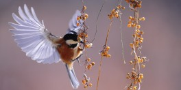 alimentação das aves